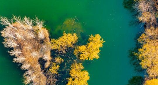 开创黄河流域生态保护和高质量发展新局面