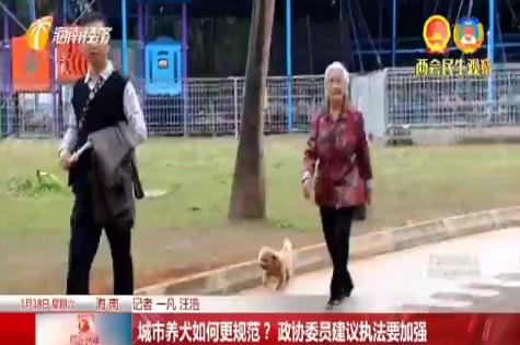 城市养犬如何更规范?政协委员建议执法要加强