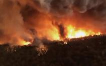 林火导致113个澳本土物种面临生存威胁