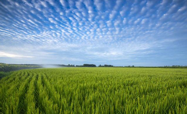 新稻2208萬噸:我國中央儲備糧家底進一步夯實