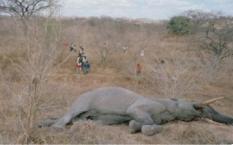 近2个月超350头死亡!博茨瓦纳政府调查大象死亡事件
