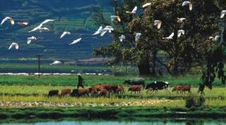 联合国报告:生物多样性持续丧失增加疾病传播风险