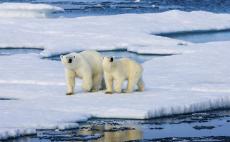 """30年升温10℃ """"新北极""""正在形成 全新气候系统将重塑地球生态"""