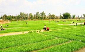 海南启动春耕春播服务 本周天气晴好有利于早稻播种培育生长