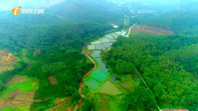 海南:为乡村振兴注入新动能 打好种业翻身仗