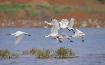 新版《国家重点保护野生动物名录》实施,海南有161种