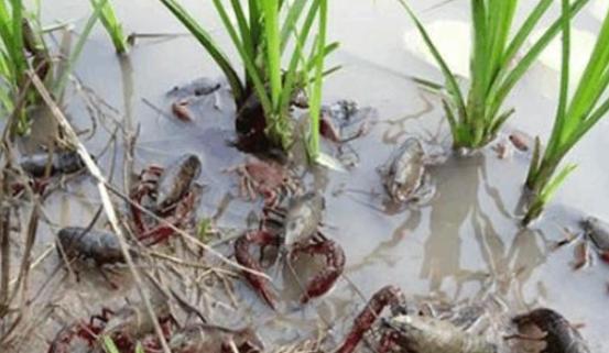 严防外来物种非法入侵 国家生物安全防护网越织越牢