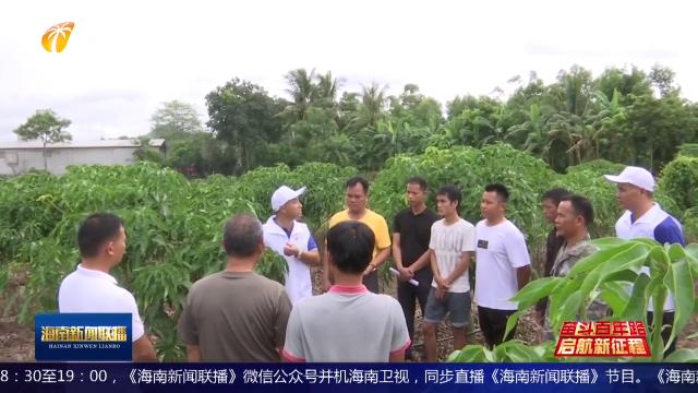 奋斗百年路 启航新征程 同心奔小康 海南:提升农业种植技术 促进农业增效 农民增收