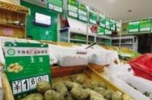 """三亚平价蔬菜零售保险正式落地 ——政府补贴8成保费,为蔬菜保""""价""""护""""行"""""""