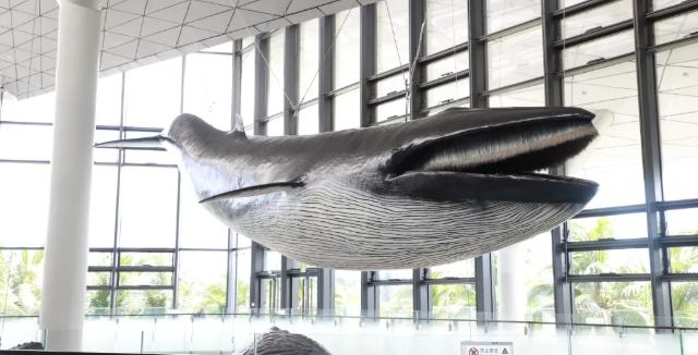 """中秋到南海博物馆观""""鲸""""去! 南海鲸灵——馆藏鲸类标本展9月19日开展"""