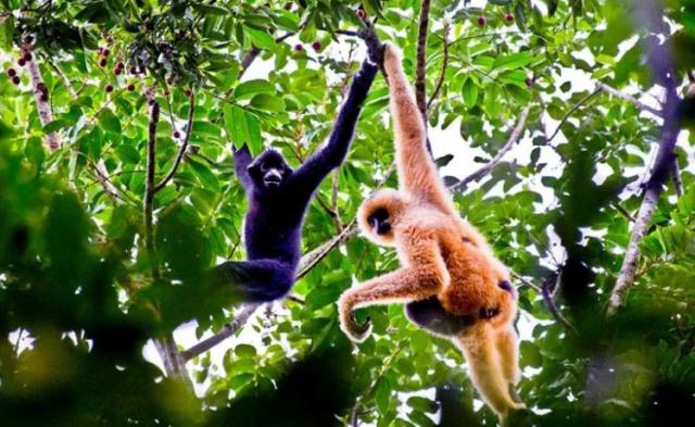 雨林王国神奇宝库——海南热带雨林国家公园