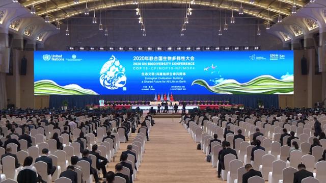 """海评面:保护生物多样性,中国""""书写成功故事"""""""