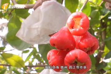 2020年中国农民丰收节海南庆祝活动将于9月22日举办
